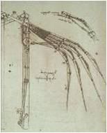 'Articulated Wing' Da Vinci